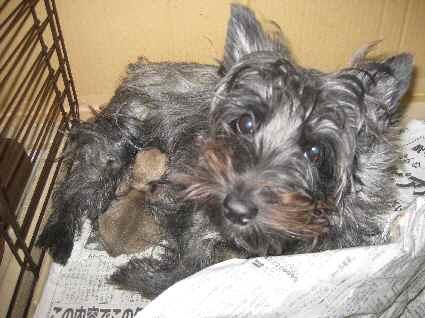ケアンテリのマリンと子犬の写真