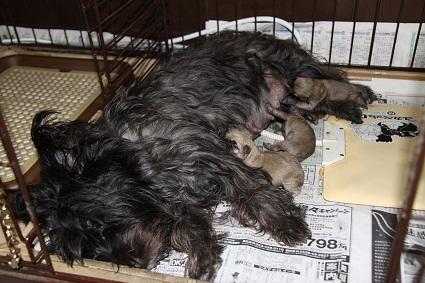 マリンと3匹の赤ちゃん